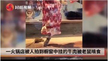 火锅店老鼠爬橱窗吃肉 市监局:已查封停业