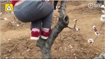 疫情期河南游客扎堆赏花还有人爬树摘花拍照 村民怒斥