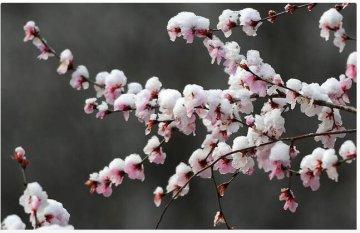 河南多地出现桃花雪 3月下旬下雪的原因在这里