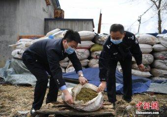 长春警方缴获成品大麻3.9吨 创吉林省纪录