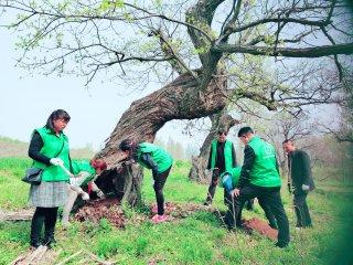 清枯除虫施肥 驻马店第二次古树复壮活动如期举行