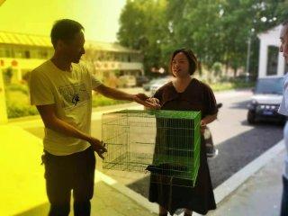 汝南县积极救助国家二级保护动物红冠水鸡